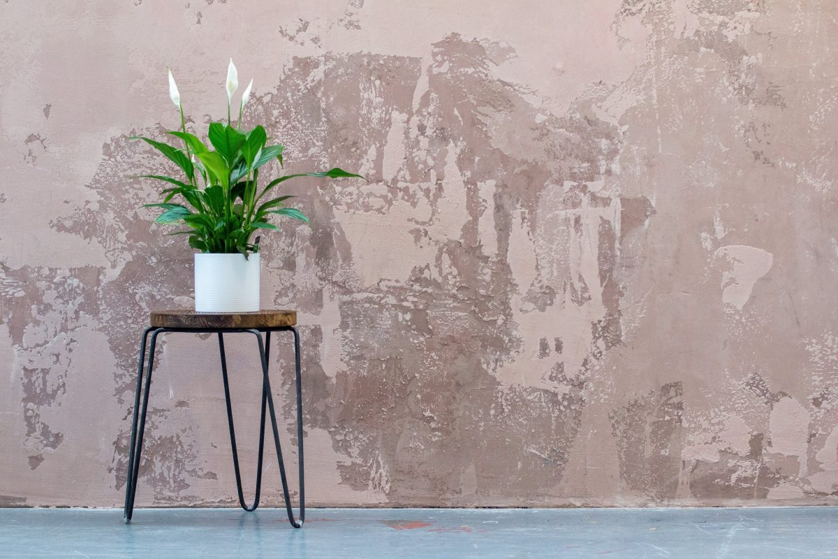 best indoor plants for beginners