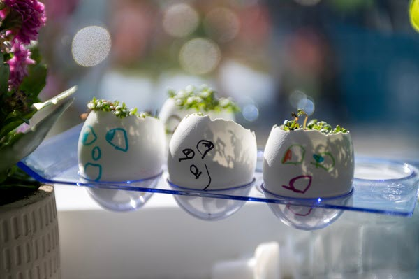 cress is very quick to grow