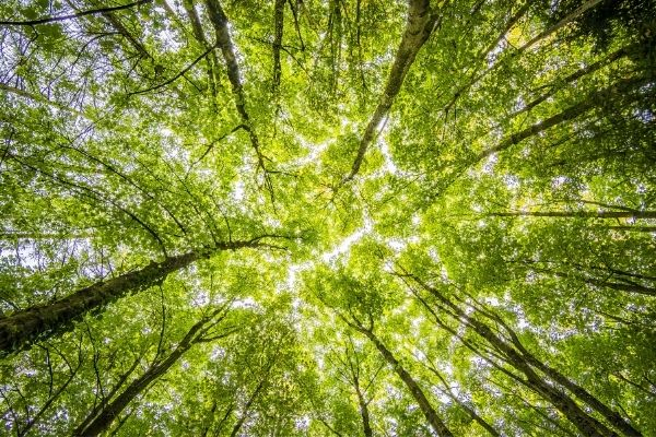 Trees remove carbon from the atmosphere and release oxygen