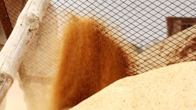 What Is Masonry Sand? (Everything You Need To Know About This All-Purpose Sand)
