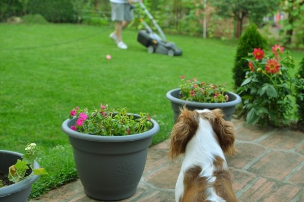 dog friendly grass alternatives for lawns gardens and backyards
