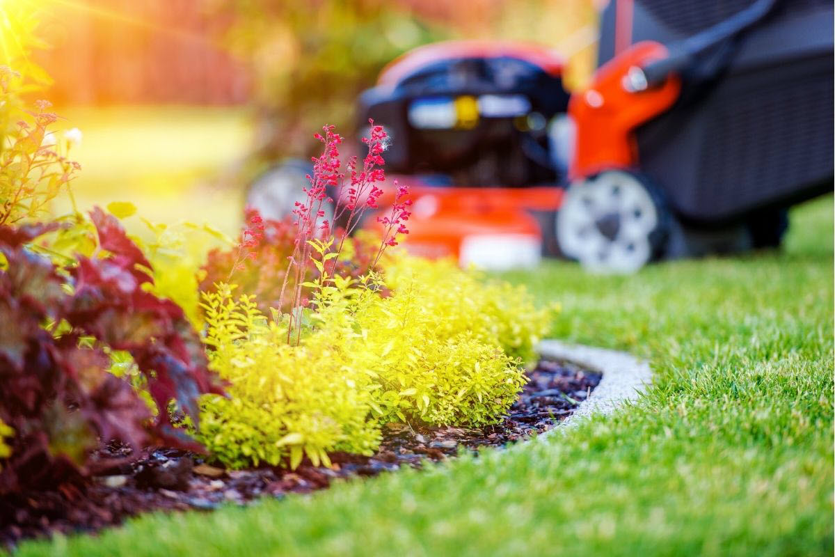 eco-friendly alternatives to grass lawns