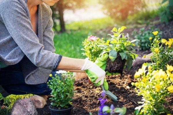 planting more plants and flowers on garden bed