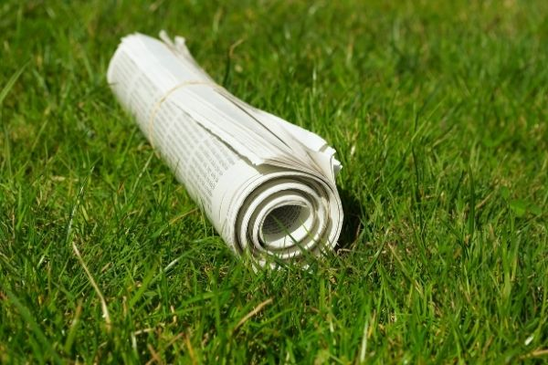 using old newspapers to eliminate sun exposure to grass lawns