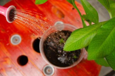 Everything You Need To Know About Compost Tea pH
