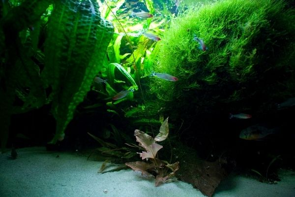 close look on a clean aquarium with sand and plants
