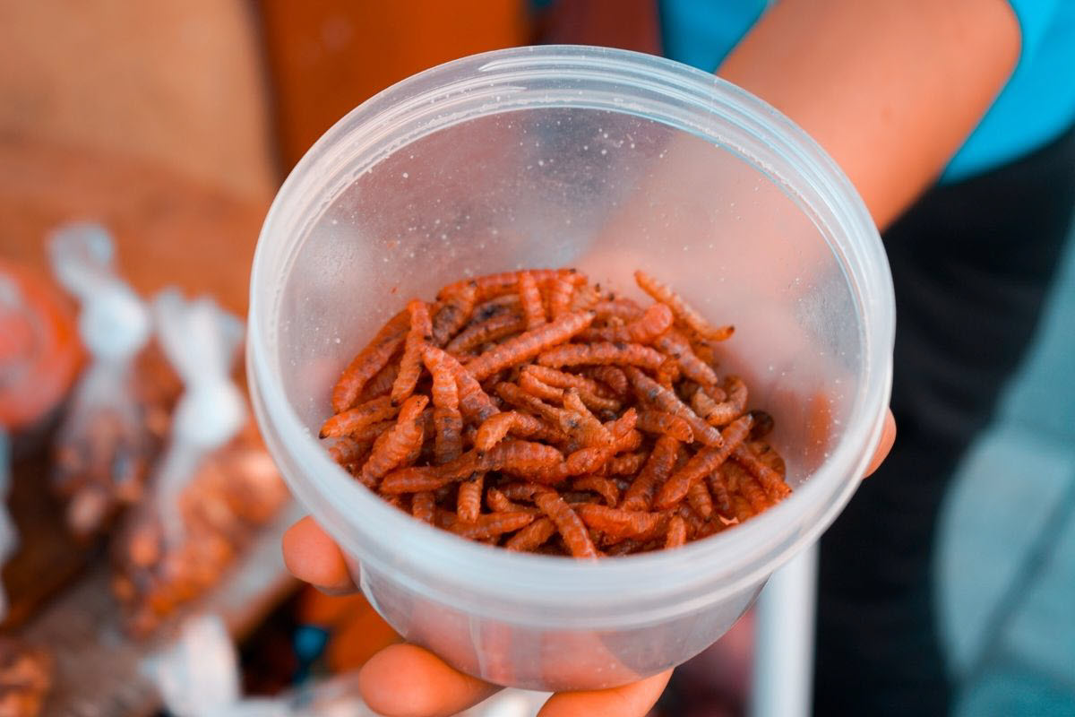 mealworms compost