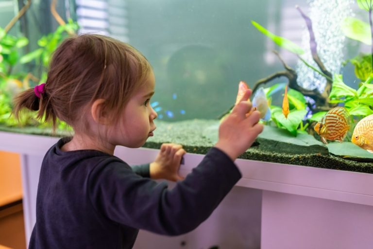 6 Types of Sand for Fish Tanks | Choose Your Sand Wisely