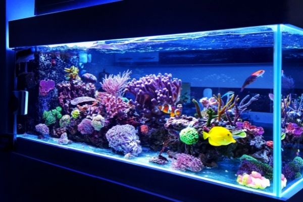 Fish tank with different types of fish