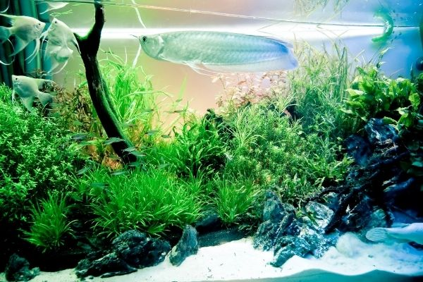 fishes and plants in a fish tank