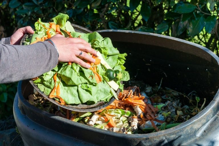 Take a Tumble: 6 Best Compost Bin Tumblers for Your Money
