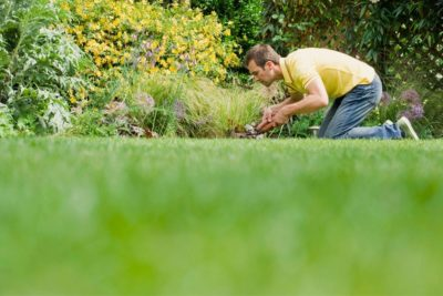 Top 5 Compost Spreaders for Lawns – Share The Compost Love!