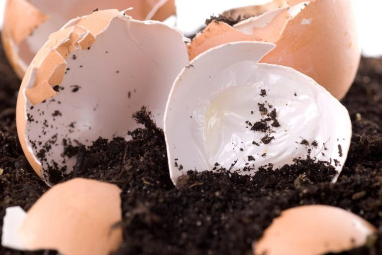 Eggshells for Compost | All Your Questions Answered