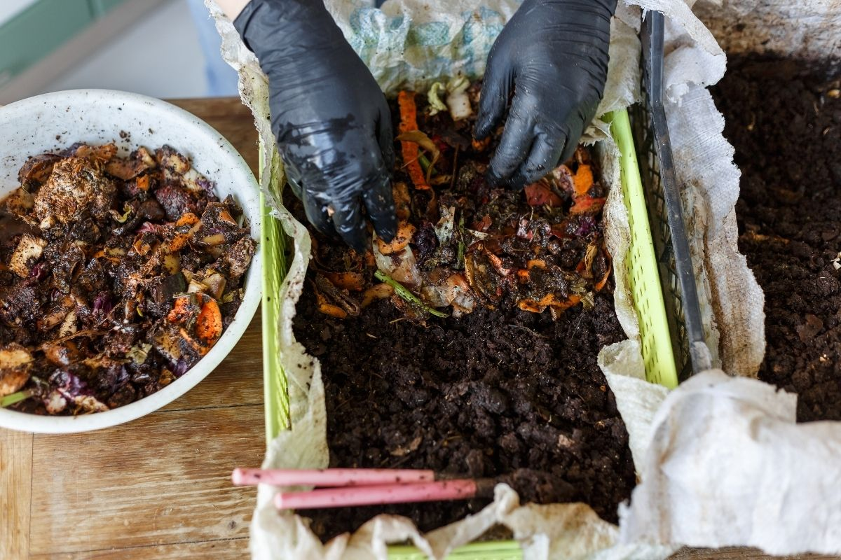How to Worm Composting Guide for Beginners