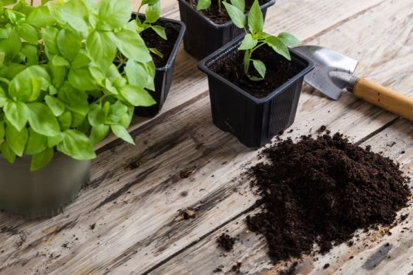 mixed soil and compost for plants