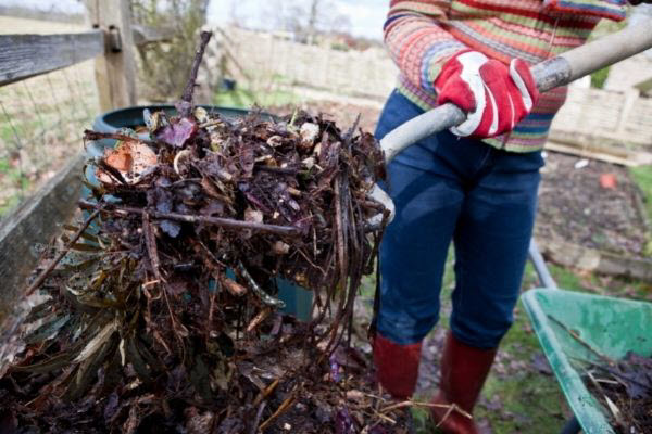 too much compost to plant directly