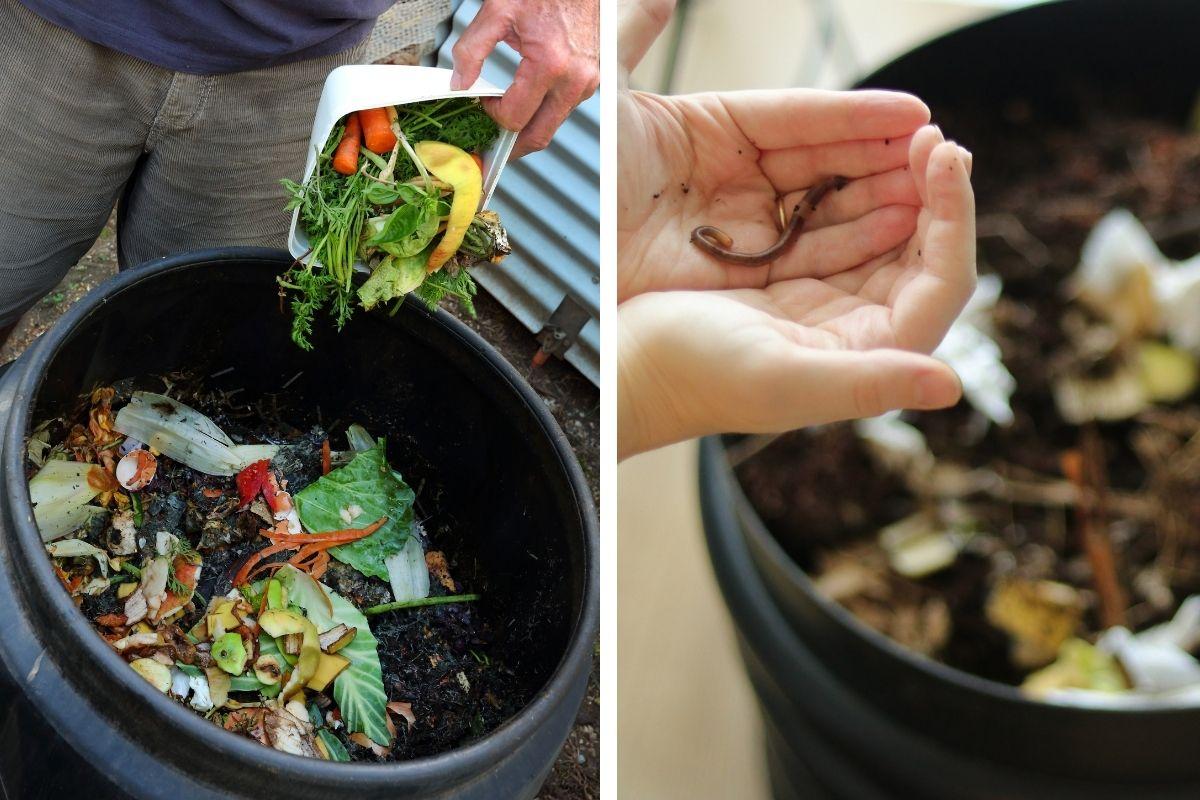 Compost Bin vs Worm Farm – Which is Better