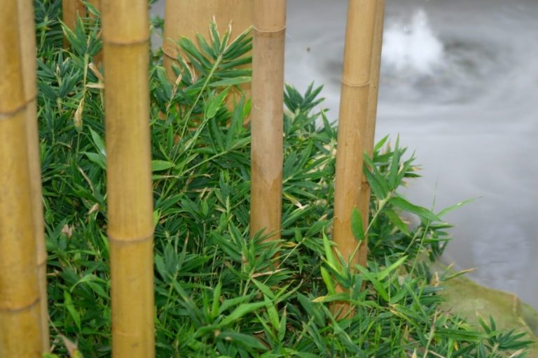 Is Bamboo Eco-Friendly (More Sustainable Than Wood?)